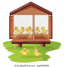 Pollitos en gallineros. Pollitos en ilustraciones de gallineros.