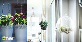 hanging indoor plants cref biz