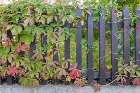 25 fantastic garden fence ideas green