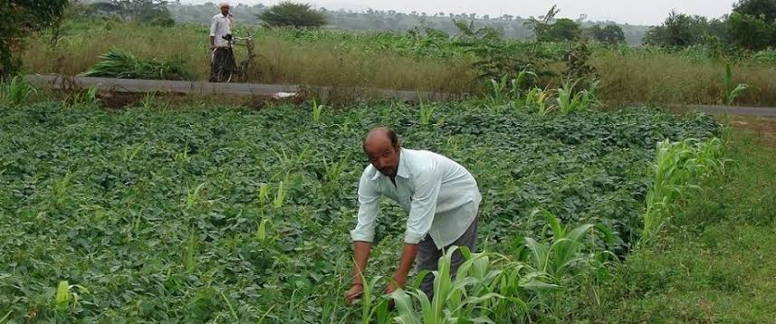 Image result for organic farming images""