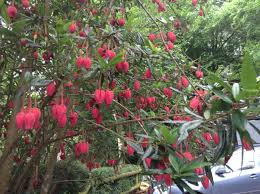 Does anyone know what this tree/shrub could be? — BBC Gardeners' World  Magazine