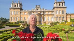 Blenheim Palace - Hilary Wood, Head of Gardens | Facebook
