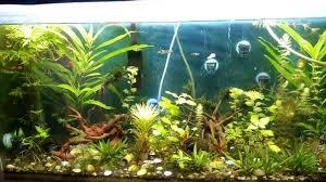 diy iron fertilizer for aquarium part 2