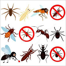 General Pest Control Services in WORLI, Mumbai - SIDDHI INSECTICIDE SERVICE
