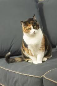 homemade diabetic cat food pets
