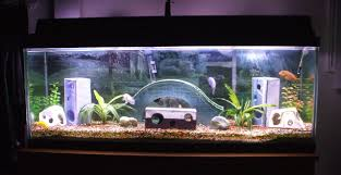 11 Unique Fish Tank Decor Ideas Beautify Your Aquarium