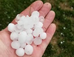 golf ball sized hail damages crops