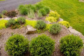 deer resistant gardens traditional