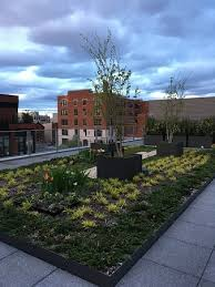 rooftop terrace with garden picture