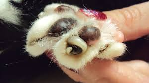 how to trim your dogs nails tavares
