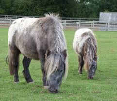 Yogi the pony stolen from Ada Cole horse centre in Roydon | East London and  West Essex Guardian Series