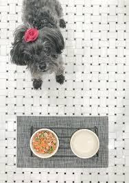 mimi eats healthy homemade dog food