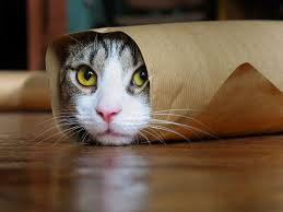 صور قطط مضحكة اجمل صور القطط المضحكه قلوب فتيات