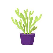 purple ceramic pot succulent plant