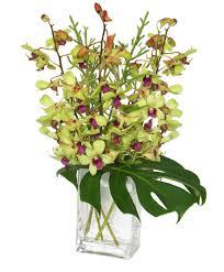 orchid arrangement in roce il