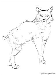 Print Een Kleurplaat Van Rode Lynx Gratis Kleurplaten