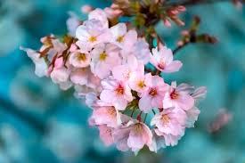صور ورد جميلة مجموعة من صور الورد رائعة الجمال روزبيديا