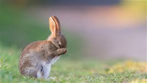 rabbit wallpapers free cute