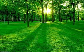 wallpapers hd 1080p nature green