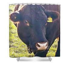 Cow Shower Curtain for Sale by Ivan Stevens