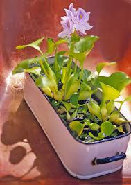 easy container water gardens midwest