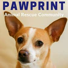 rescue podcast for dog cat