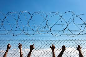 Three Human Hands On Barbed Wire Photo Image Picture Free Download 501507717 Lovepik Com