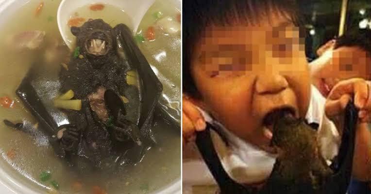 "Image result for china bat soup"""