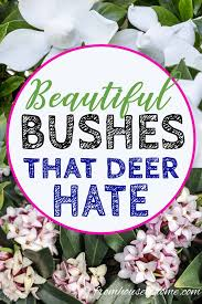 deer resistant shade plants to grow