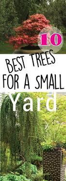 22 best patio trees images patio