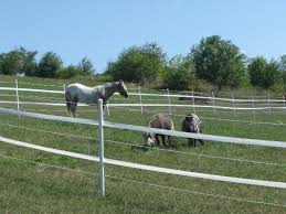 Horse Fence Strapping Growers Supply