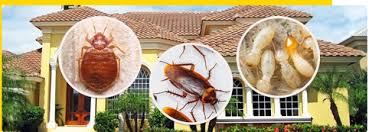 Residential Pest Control Service, घर के लिए पेस्ट कंट्रोल, हाउसहोल्ड पेस्ट  कंट्रोल, घरेलू कीट नियंत्रण in PK Biswas Road, Kolkata , Kolkata Pest  Control power by monteverde | ID: 17549389897