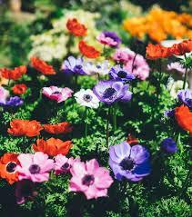 15 fascinating flower garden designs