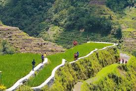 Ifugao governor disputes FAO on deterioration of rice terraces ...