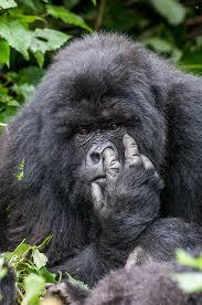 صور مضحكة للحيوانات مائتان صورة لرفع مزاجك
