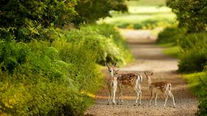 nature s deer fawn baby s