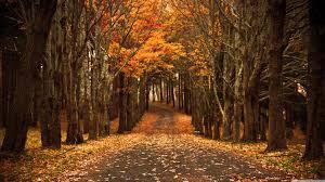 late autumn ultra hd desktop background