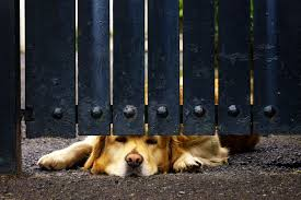 How To Stop A Dog From Digging Under A Fence