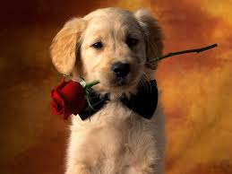 puppy wallpapers free wallpaper cave