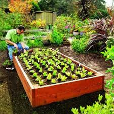 raised bed planting pat welsh organic