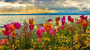 spring nature desktop backgrounds hd