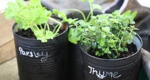 diy herb project