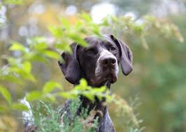 is your yard safe for your dog watch