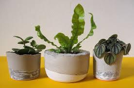 23 stylish diy concrete planters for