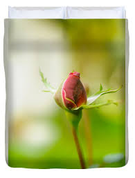 perfect red rose bud duvet cover for by humorous quotes