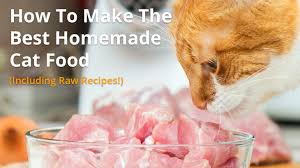best homemade cat food recipes raw or