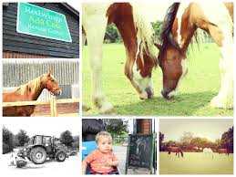 Redwings Horse Sanctuary: Respite From Life's Craziness - Great Health  Naturally