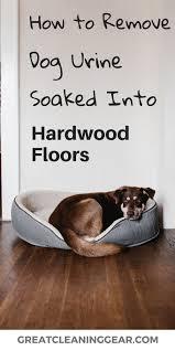dog urine soaked into hardwood floor
