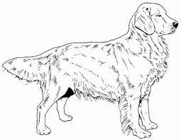 Golden Retriever 5 X 7 Cm Hond Tekeningen Golden Retriever