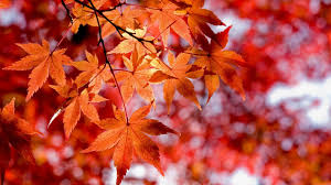 newest fall flowers images wallpapers